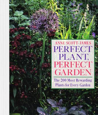 perfect-plant